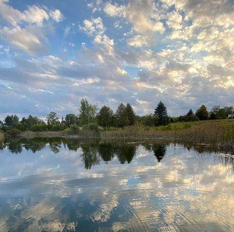 Hedgerow Pond