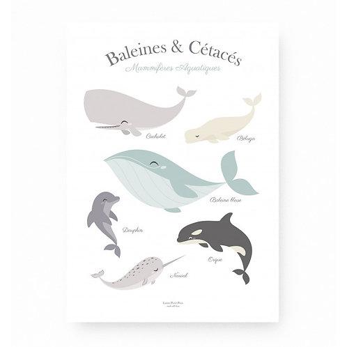 Baleines & Cétacés-Lutin petit pois