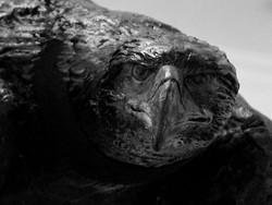 Aigle (détail)