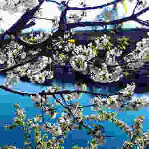 водопад Ниагара Черногория, река Цьевна, цветущее дерево Черногория