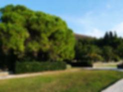 Деревья в парке Милочер