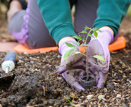 person gardening occupational therapy