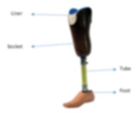 Below-Knee-Prosthetic-Leg.png