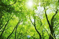 Green(中).jpg
