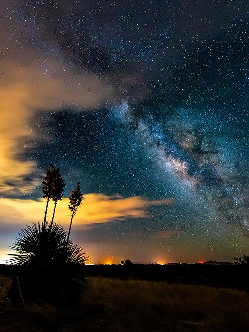 Yucca Tree Milky Way
