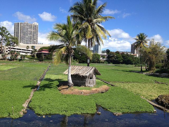 Sumida Farm