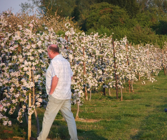 Mike in Gala Blossom