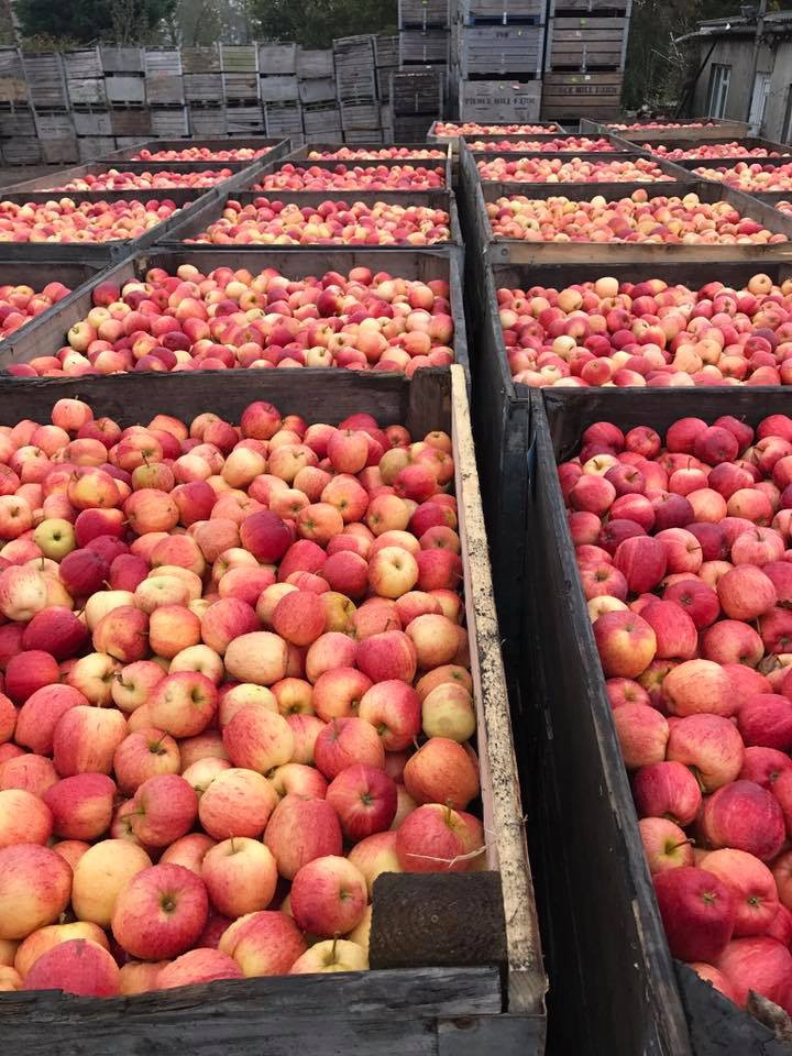 Apples Picked and ready to go