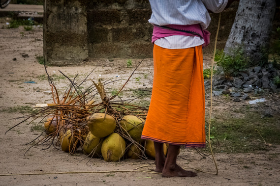 Selling cocconuts is a way for some to get an income to get by.