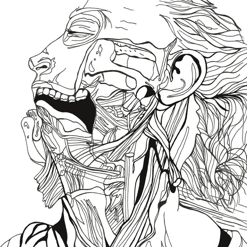 anatomical2