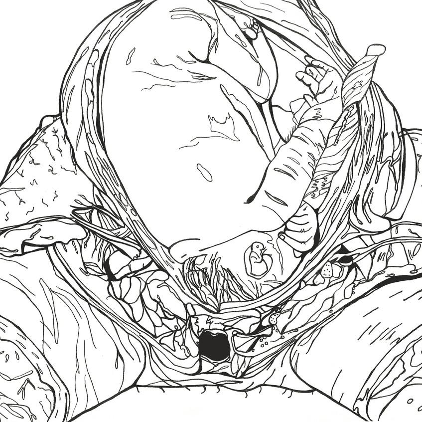 anatomicalbaby