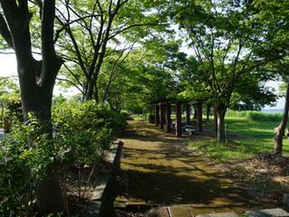 針江浜遺跡