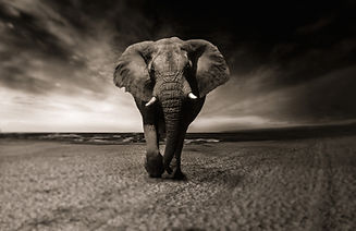 elephant-2870777_1920.jpg