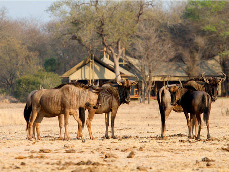 South African Safari on your List? Special Promotion