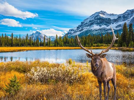 Destination Spotlight: Canada