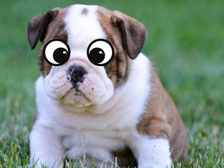 Bad Puppy Terrorizes San Antonio Streets, Sends Thousands to Cobbler
