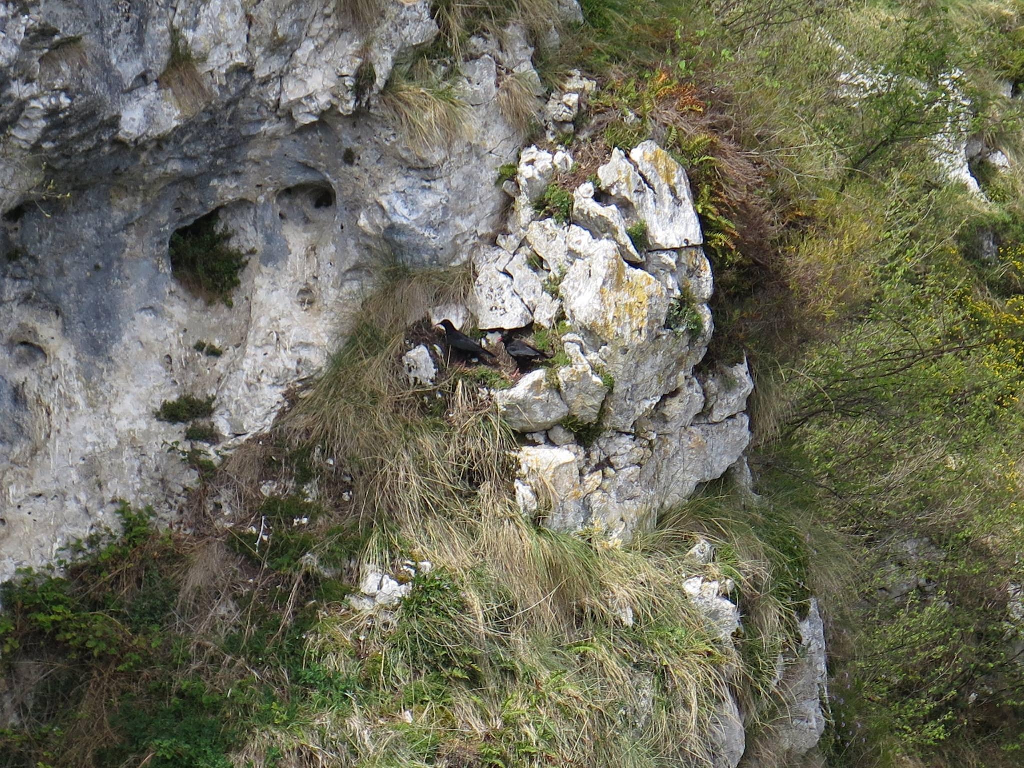 2017.05.2 y3 - Viaje Covadonga Sector Hnos. Mayores (27)