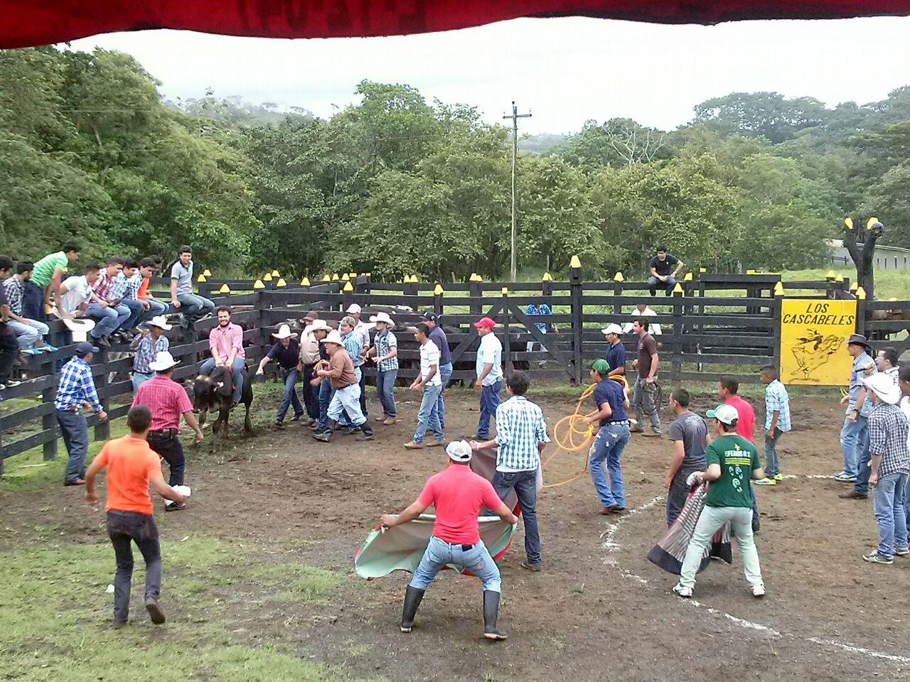 Montando toros en el día libre