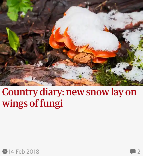 Guardian Country Diary