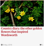 Country diary: the other golden flowers that inspired Wordsworth. Guardian Country Diary 9 May 2019