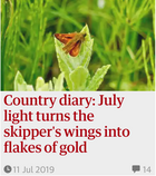 Country diary: July light turns the skipper's wings into flakes of gold. 11 Jul 2019