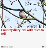 Tits with tales to tell  Guardian Country Diary 13 Feb 2019