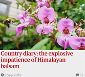 Country diary: the explosive impatience of Himalayan balsam. 5 Sep 2019