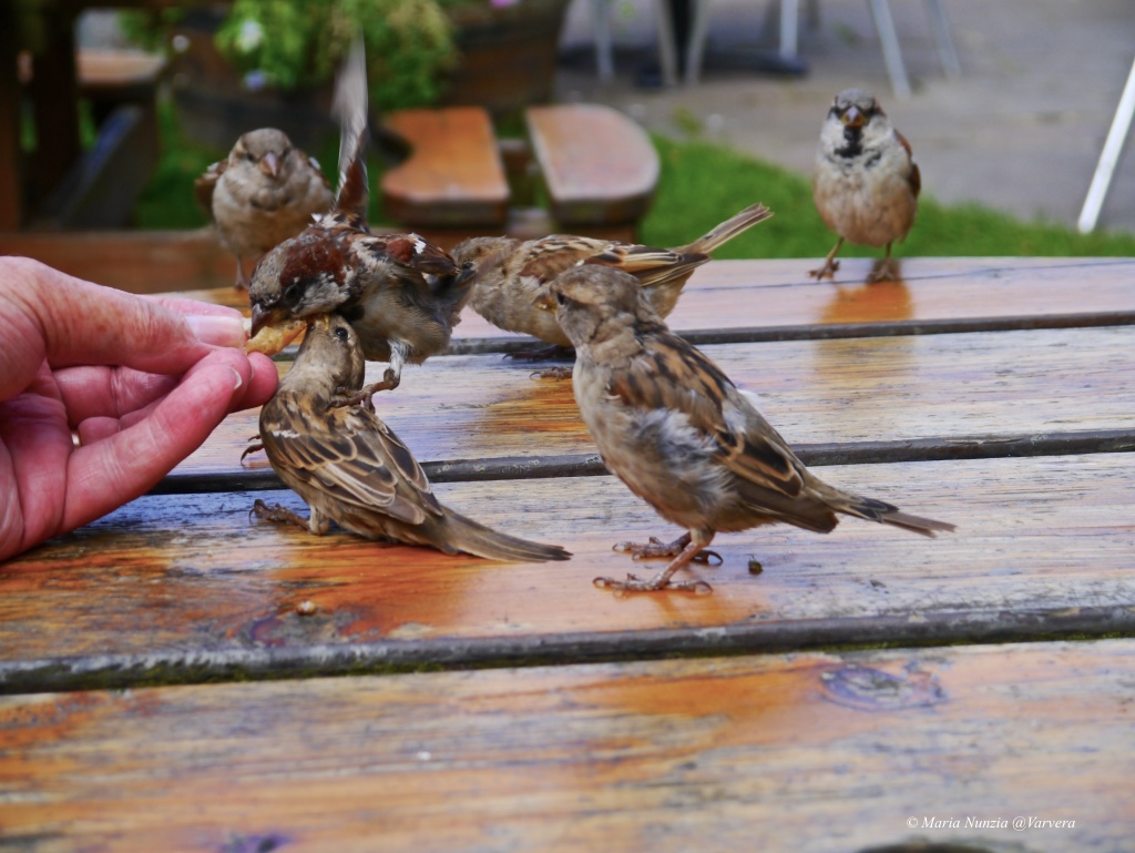 Sparrows_©_Maria_Nunzia__Varvera_
