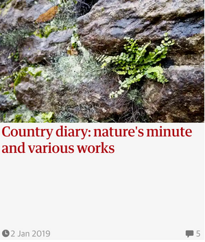 Nature's minute and various works  Guardian  Country Diary  2 Jan 2019