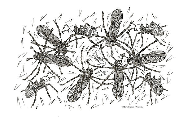 Chapter illustration Field Note s From The Edge Shining guest ants