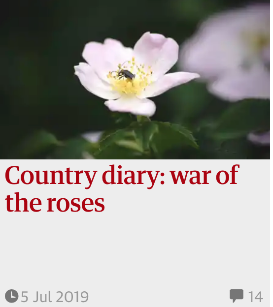 Country diary: war of the roses 5 Jul 2019