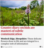 Country diary: orchids are masters of subtle communication. 27 Jun 2019