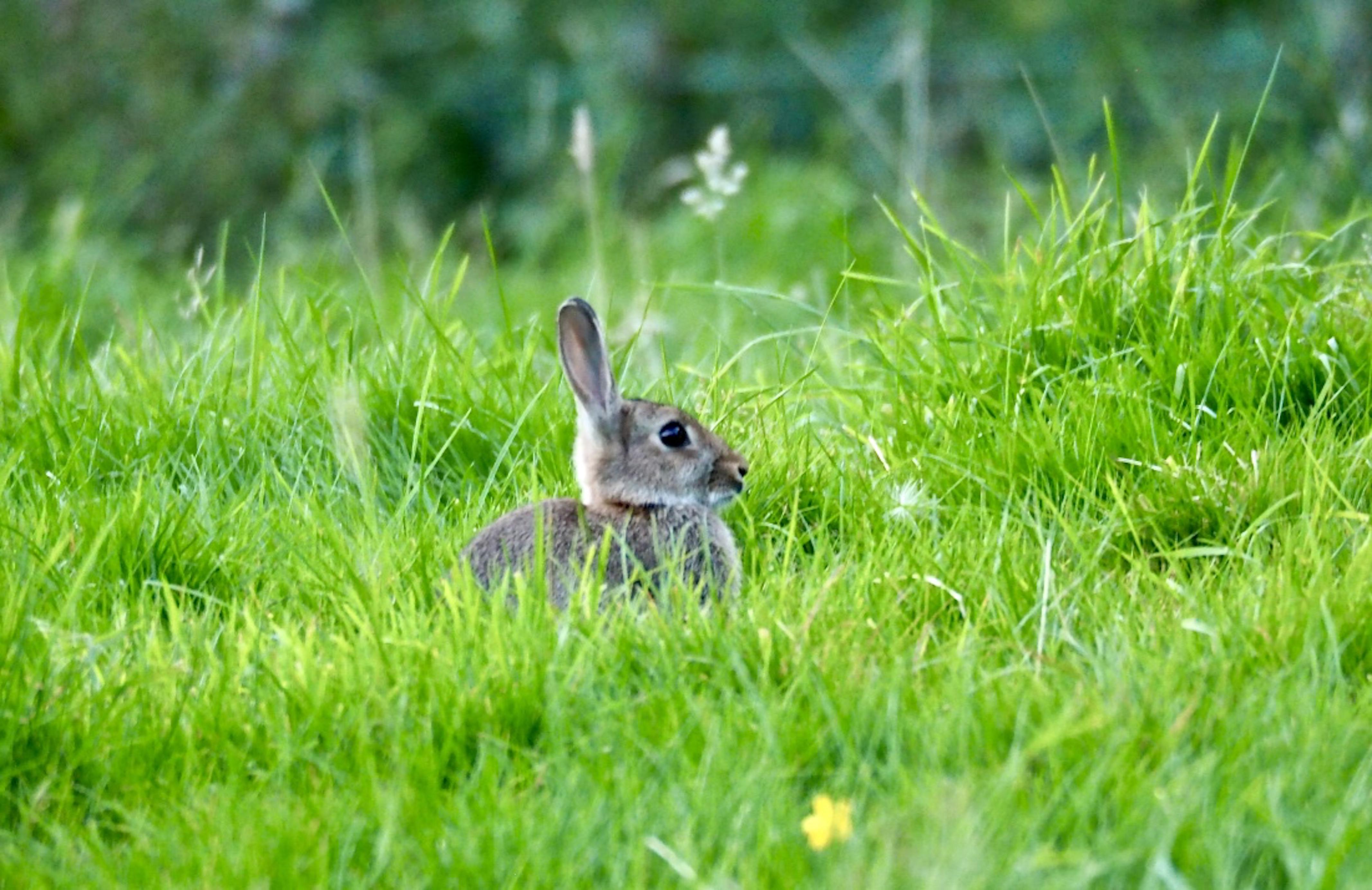 1._Rabbit_©_Maria_Nunzia__Varvera_