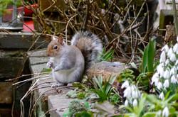 Hazards galore in squirrel's hunt