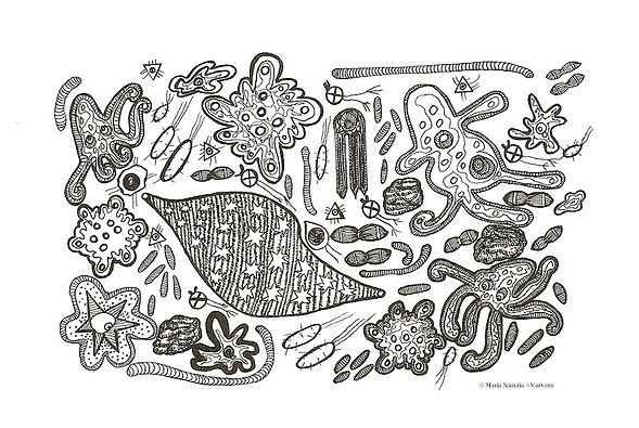 Chapter illustrations Field Notes From The Edge Microbes