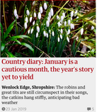 January is a cautious month, the year's story yet to yield. Guardian Country Diary 23 Jan 2019