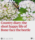 Country diary: the short happy life of Bone-face the beetle. 29 Jul 2019