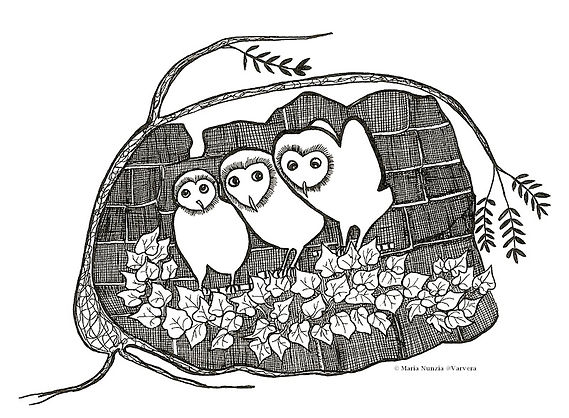 Chapter illustration Field Notes From The Edge Owlets