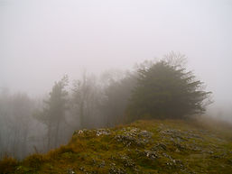 Yew in fog on Wenlock Edge  photograph by Maria Nunzia @Varvera