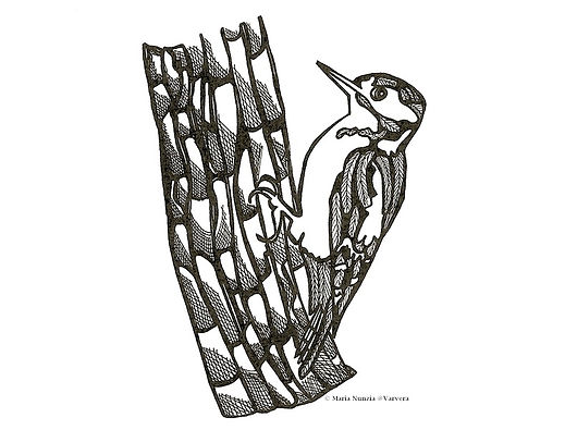 Chapter illustrations Field Notes From The Edge Woodpecker