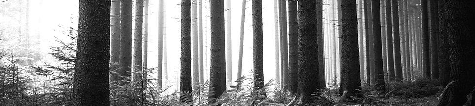 skog_sv_edited_edited_edited.jpg