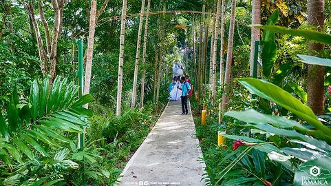 Walk-Way Wedding.jpg