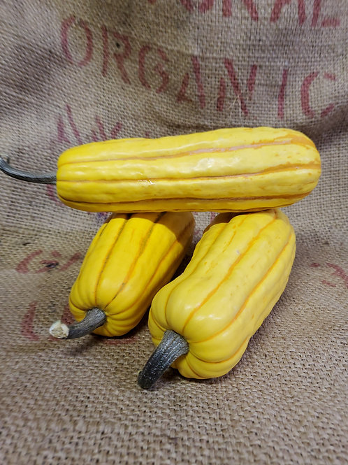 Winter Squash ( Delicata)