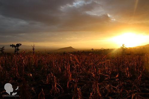 Sunset in Uchira (Digital Copy)
