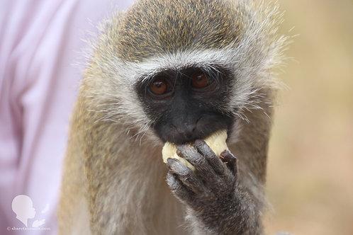 Monkey (Digital Copy)