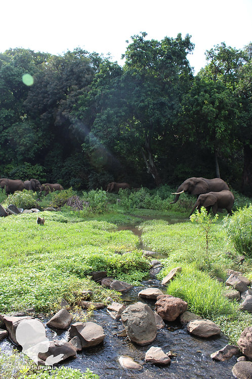 Elephants in the Paradise of Lake Manyara (Digital Copy)
