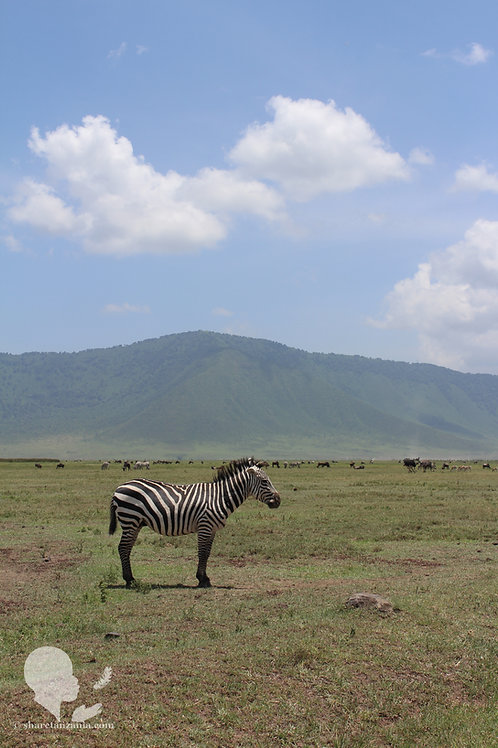 Zebra in Ngorongoro Crater (Digital Copy)
