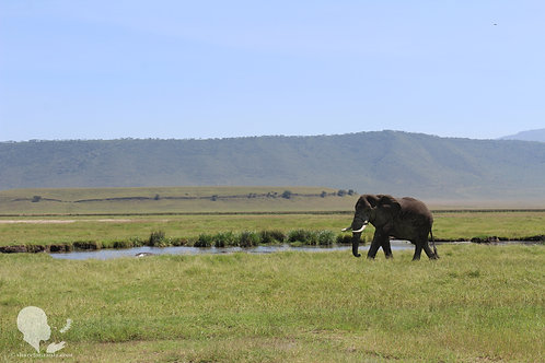 Elephant in Ngorongoro Crater (Digital Copy)