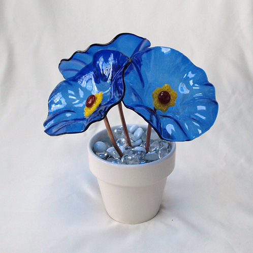 Potted Blue Flowers