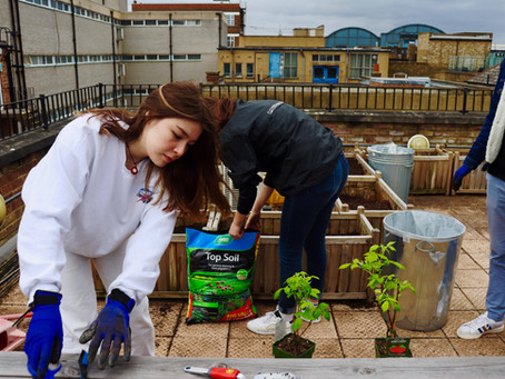 Dau'Green launches its vegetable garden project!